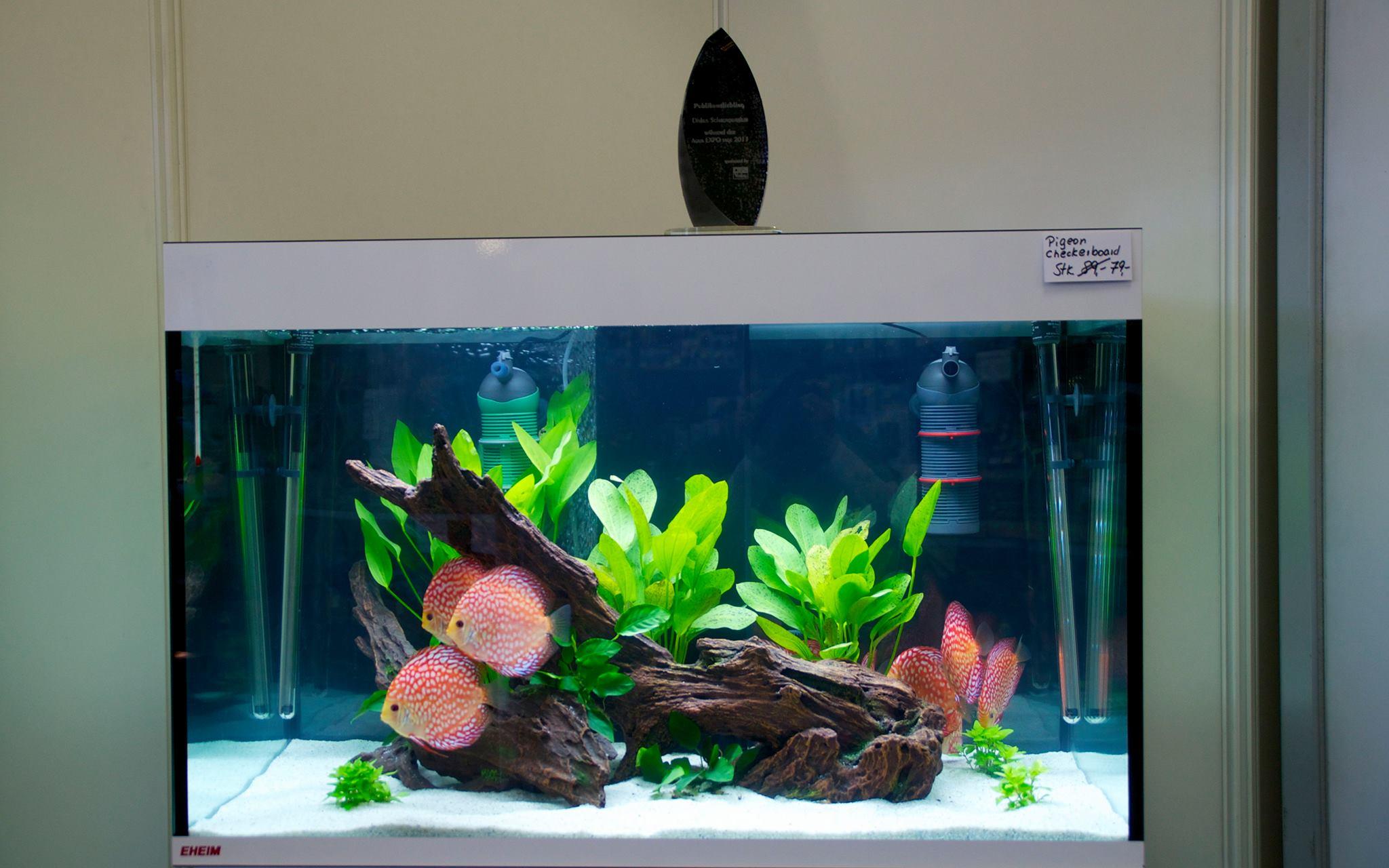 Diskus direkt in der pressediskusfische kaufen for Diskus aquarium