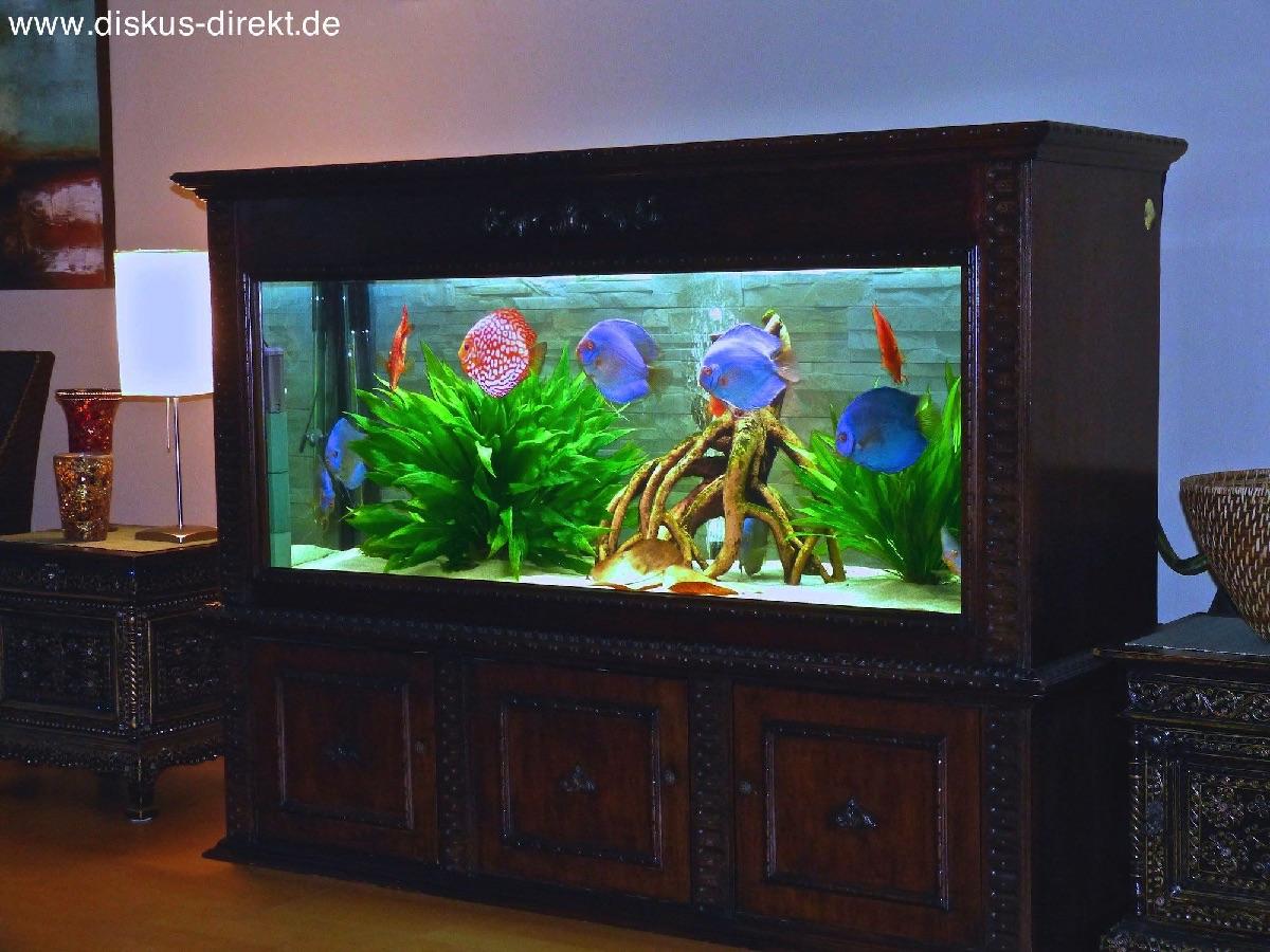 bilder von diskusfischen. Black Bedroom Furniture Sets. Home Design Ideas