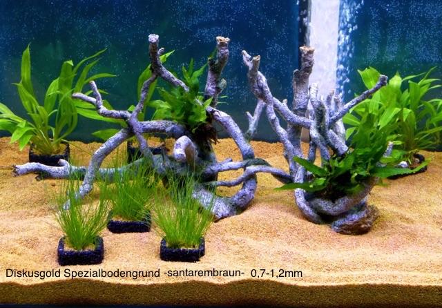 diskusfische pflanzt pfe set 6 stck schwarz 4 cm x 4 cm ohne pflanzen versandkostenfrei. Black Bedroom Furniture Sets. Home Design Ideas